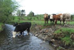 Options Available Under DAERA's Environmental Farming Scheme (Wider)